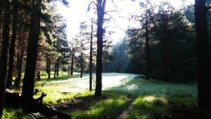Mogollon Monster 100 landscape trees