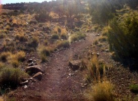Fast Downhill running at Desert RATS 25 Mile Race