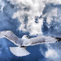 seagull-thumbnail