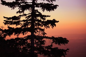 picture of a tree at sunset on grandeur peak in Salt Lake City utah