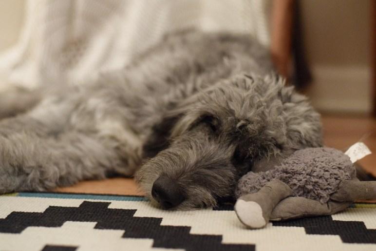 Sleepy roo