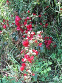 FLOWERS-ON-TRAIL1711