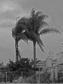 wind in palms