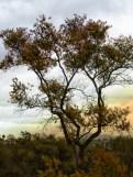 tree at lake color