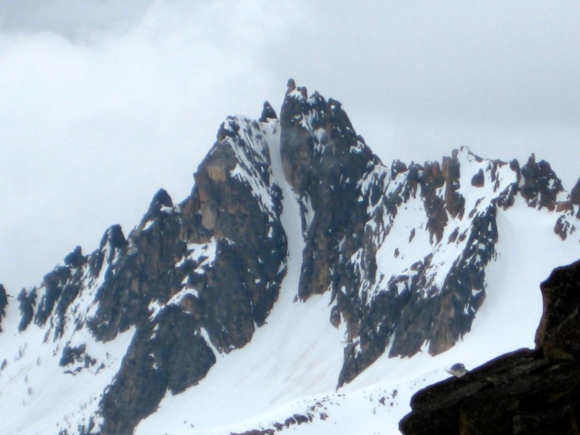 Big Kangaroo From Silver Star Mountain 2014