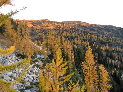 Golden Larch Country