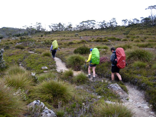 Traversing Waterfall Valley On Overland Track