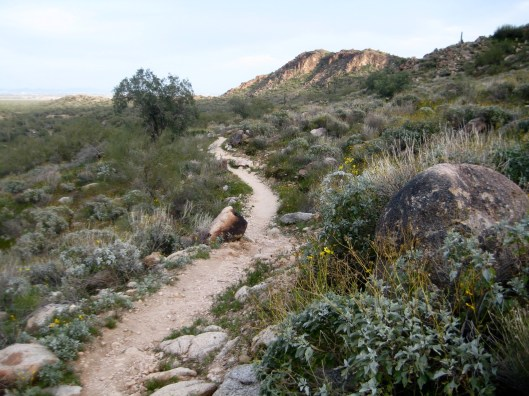 Lower Ford Canyon Trail