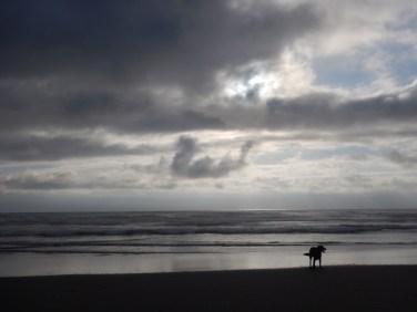 Happy ocean dog
