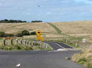 Taking a beautiful run on Phillip Island