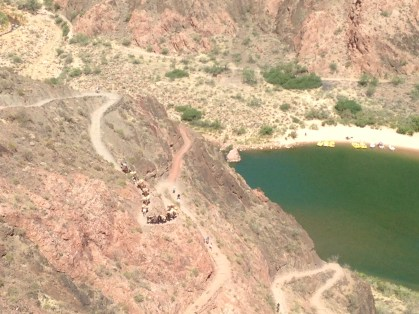 The green of the Colorado River