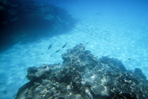Snorkeling the Great Barrier
