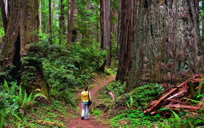 8 Outdoor Experiences for Girl Scouts in Northern California National Parks