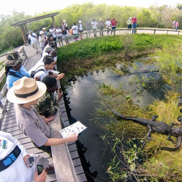 3 Best Day Hikes in Everglades National Park