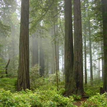 7 Best Day Hikes in Redwood National and State Parks