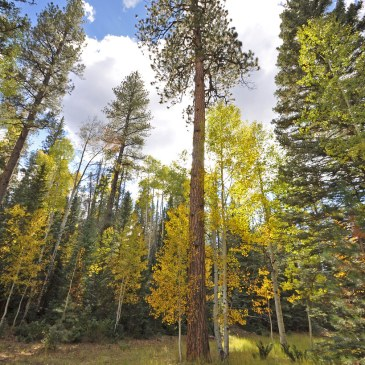 Best Hikes in Kaibab National Forest (AZ)