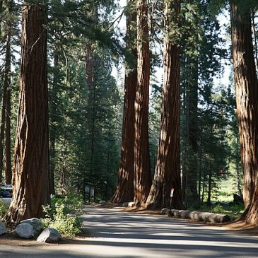 Best Hikes in Sequoia National Forest (CA)