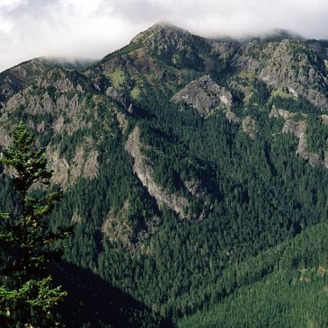Best Hikes in Olympic National Forest (WA)