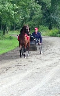 carriage horse driving