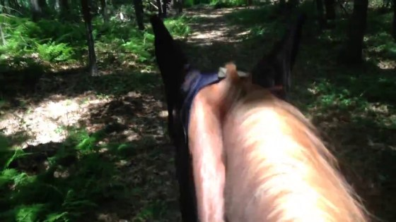 Excuse my ramblings about the importance of trail horse...