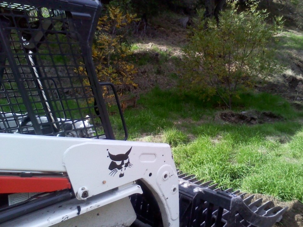 bobcat at the Bobcat