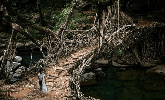 tree-root-vine-bridge
