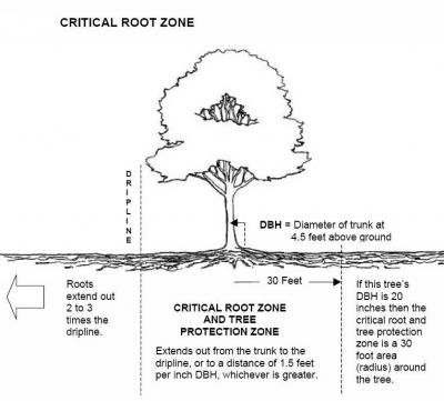 Tree-root-zone