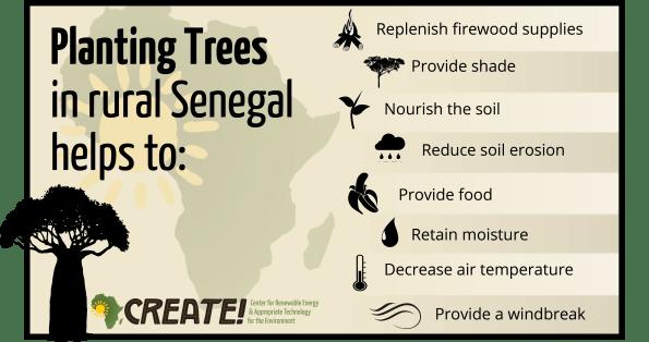 Tree benefits Infographic