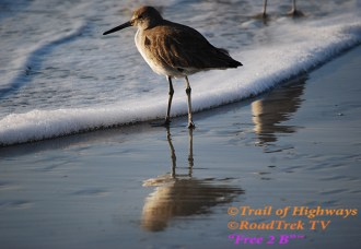 Sandpiper-Beach-St Simons Island-Trail of Highways-RoadTrek TV-Organic Content-Marketing-Social SEO-Travel-Media-