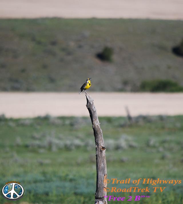 Montana-Backroads-Spring-Birdwatching-Trail of Highways-RoadTrek TV-Social SEO-Organic-Content Marketing-Tom Ski-Skibowski-Photography-Travel-Media-39