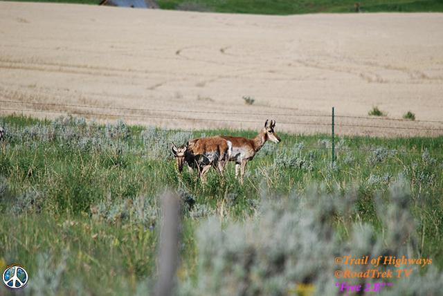 Montana-Backroads-Spring-Birdwatching-Trail of Highways-RoadTrek TV-Social SEO-Organic-Content Marketing-Tom Ski-Skibowski-Photography-Travel-Media-42