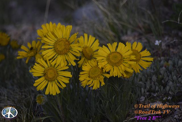 Mount Yale Trail-14er-Colorado-Hiking-Climbing-Trail of Highways-RoadTrek TV-Social SEO-Organic-Content Marketing-Tom Ski-Skibowski-Photography-Travel-17
