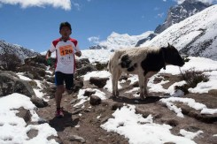 everest marathon 2014-182