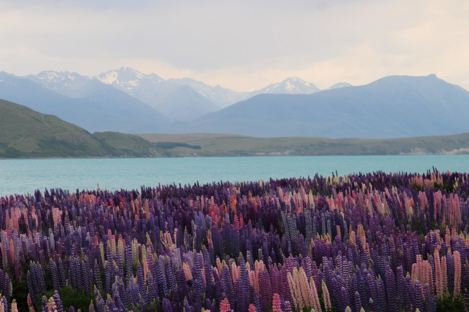 Lake Tekapo- Worth they hype?