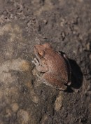 Well camouflaged frog