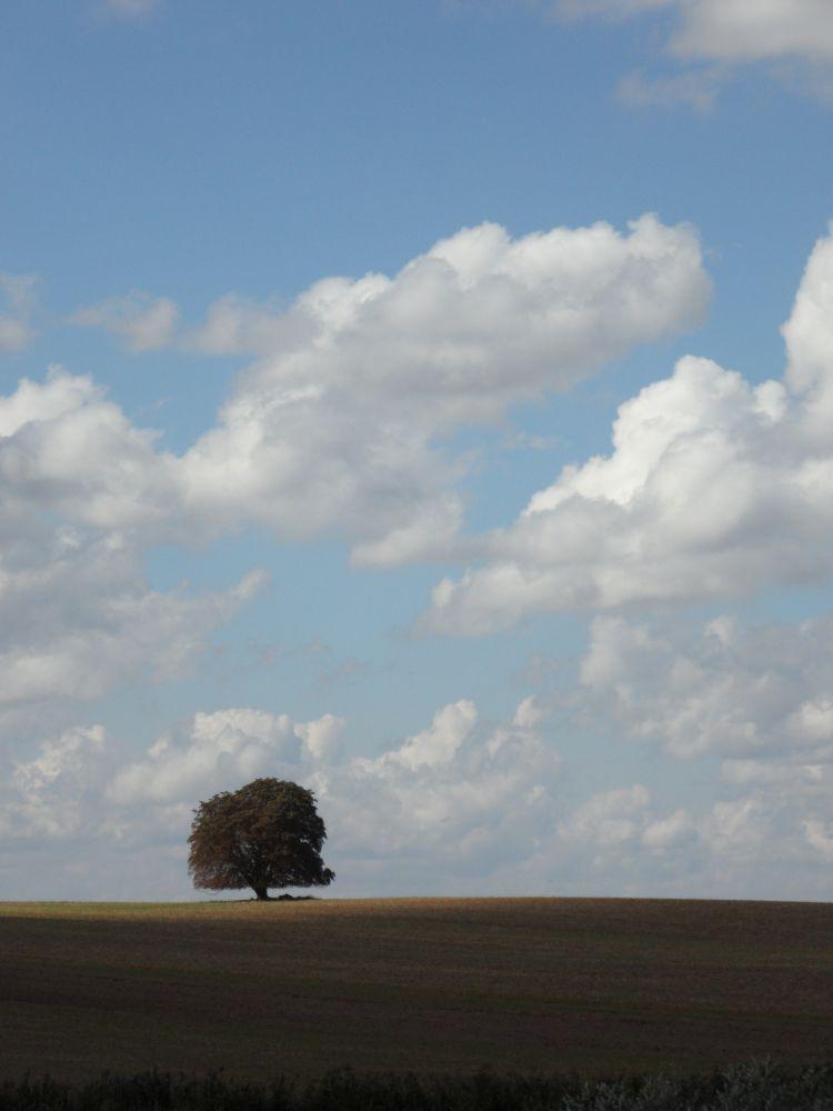 ein fast schon berühmter Baum in der Uckermark
