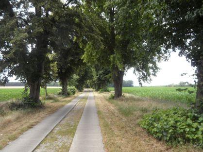 Weg bei Kützkow