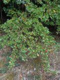 Überall Beeren
