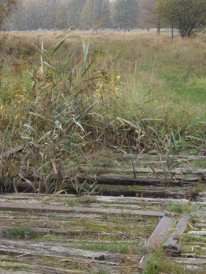 Die Muhrgrabenbrücke wird langsam durchlässig