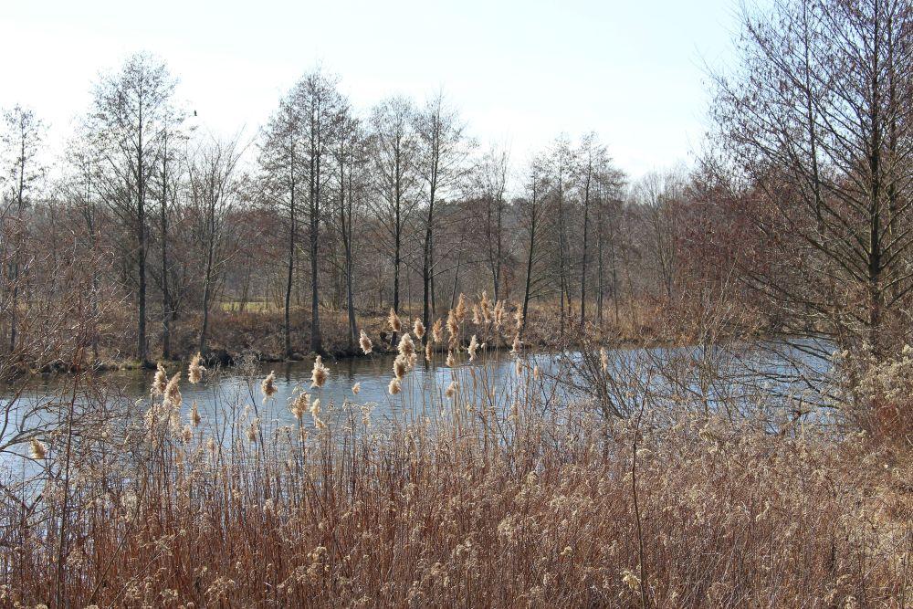 Am Havelkanal