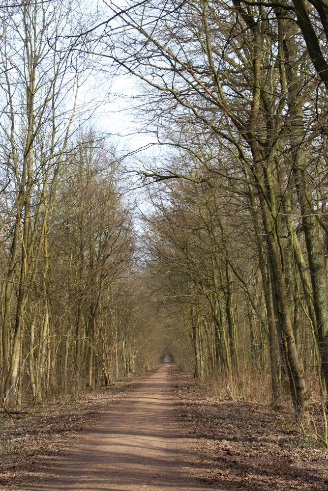 Falkenhagener Luchweg
