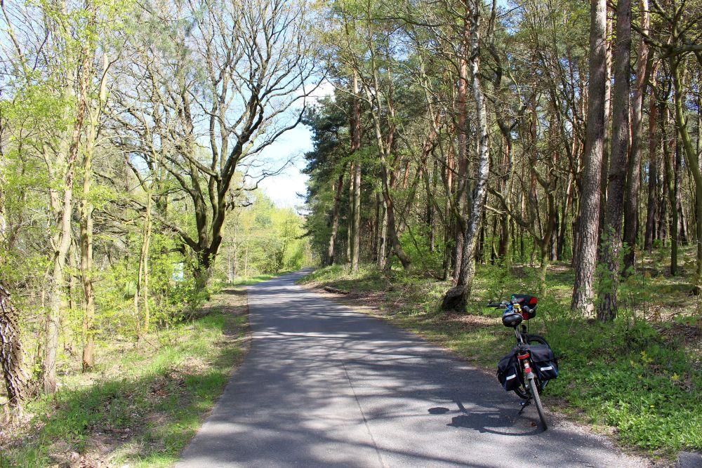 Der Havelradweg in der Stolper Heide bei Henningsdorf