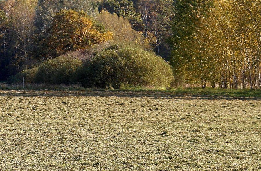 Frisch gemähtes Gras Mitte Oktober. Ein gänzlich unerwartetes Geruchserlebnis.