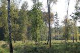 Neuendorfer Heide