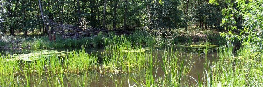 Die Kuhlake im Spandauer Forst