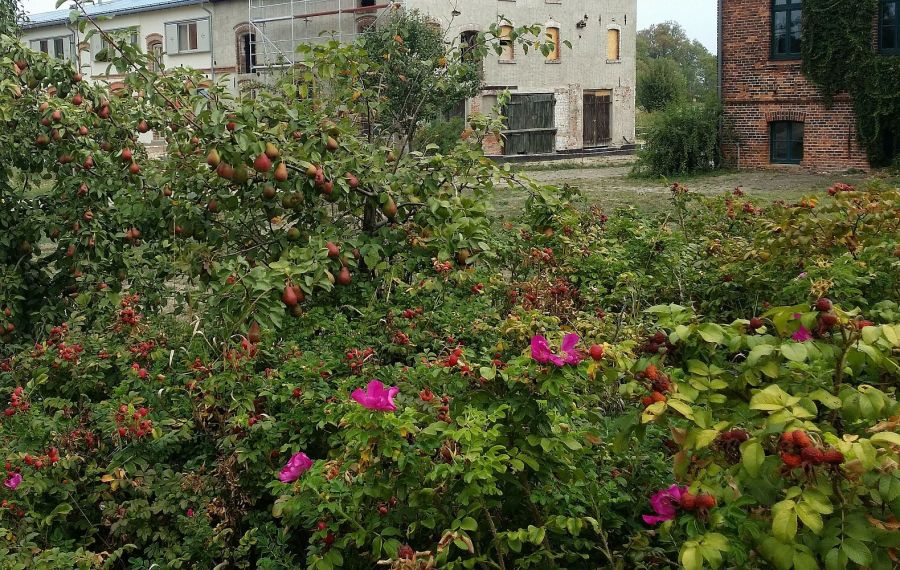 Birnen in Ribbeck