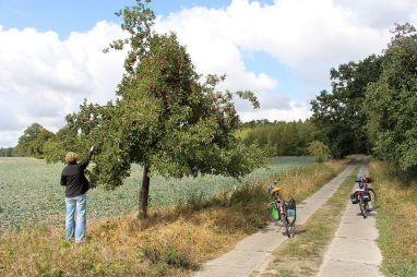 Die Apfelbäume hängen voll. Ich plädiere in diesem Fall auf Mundraub.