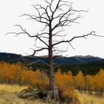 Colorado Trail segment 5