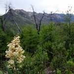 Red Ridge Loop trail