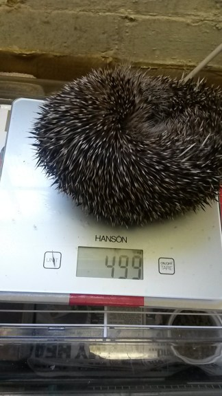 Mikey is struggling to gain weight and remains at around 500g.